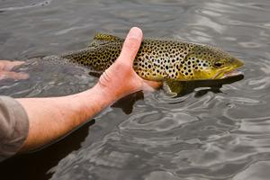 loch watten brown trout