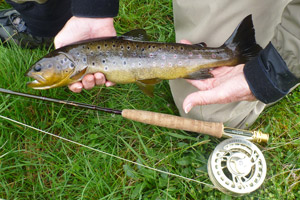 river alness trout fishing