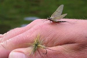 assynt mayfly hatch