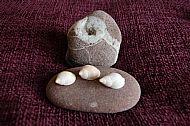 Stones & Shells