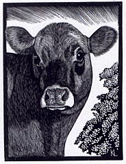 The Brown Cow