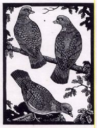 The Three Pigeons