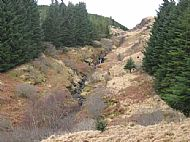 Tormore forest natural regeneration