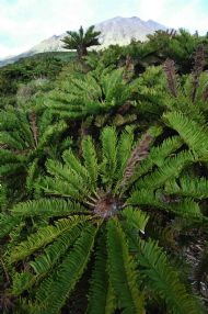 BOG FERNS AND SUMMIT