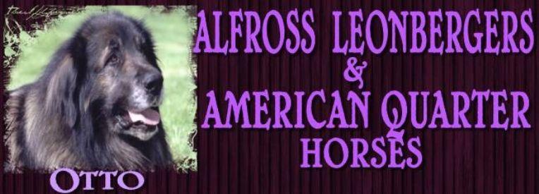 ALFROSS Leonbergers & Quarter Horses