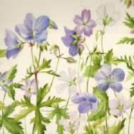 Geranium Blue mixed