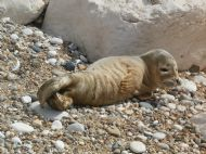 Seal Pup on Beach