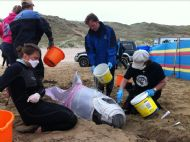 BDMLR Medics caring for a stranded whale