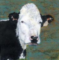 Clava Cow