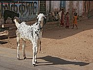 Back Street, Jodhpur