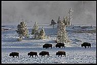 Yellowstone Winter Scene