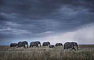 Runner-up<br>Elephant Herd at Dusk