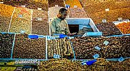 Date Seller, Marrakech