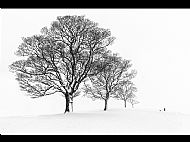 Monochrome, Silver Medal<br>A Walk in the Snow