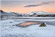 Landscape, Silver Medal<br>Frozen Fronds