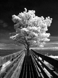 Guardian of the Bridge (infrared)