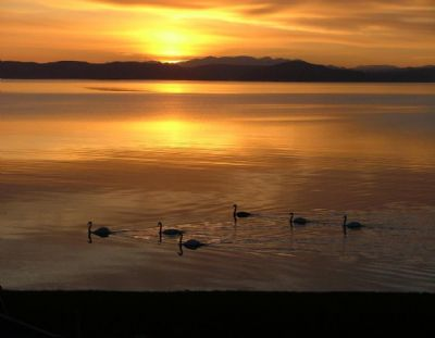 swans at sunset 2006