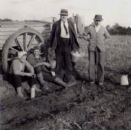 c1955 Potato Picking.