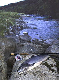 novar fishings, river alness. salmon caught on beat 2, meadow flats