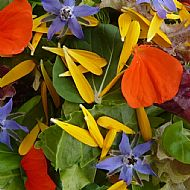 Edible Flower Seeds