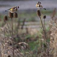 Wildflower Bird Food Mix
