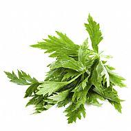Celery Leaf (B)