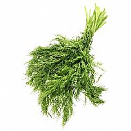 Fennel (P)