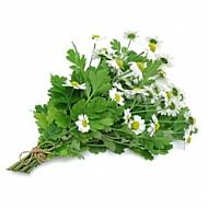 Feverfew (P)