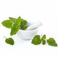 Lemon Balm (P)