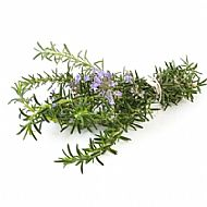 Rosemary (P)