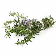Rosemary (P)