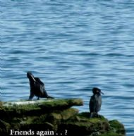 FRIENDS AGAIN...?