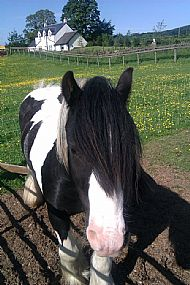 Billy the Rescue Pony