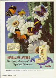 Cusson's Imperial Leather - butterflies on cactus
