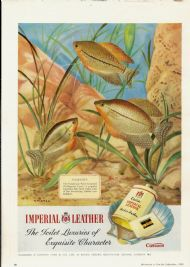 Cusson's Imperial Leather - Pearl Gouramis
