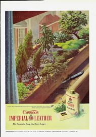 Cusson's Imperial Leather - window box with dwarf trees