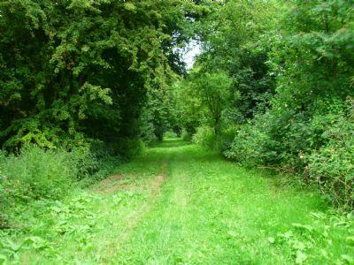 hemplow woods