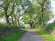 Guilsborough Road in October