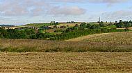 Honey Hill in July