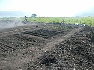 Planting and rows
