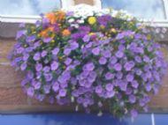 High Street Blooms 2006