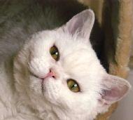 Schmoo as a kitten
